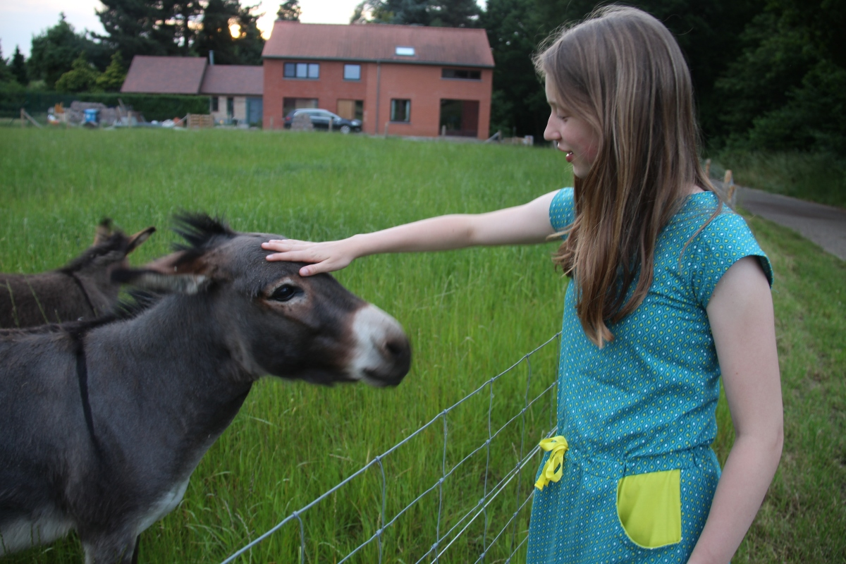 Donkeys and a candydress